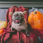 COVID-Friendly Ways to Celebrate Halloween This Year