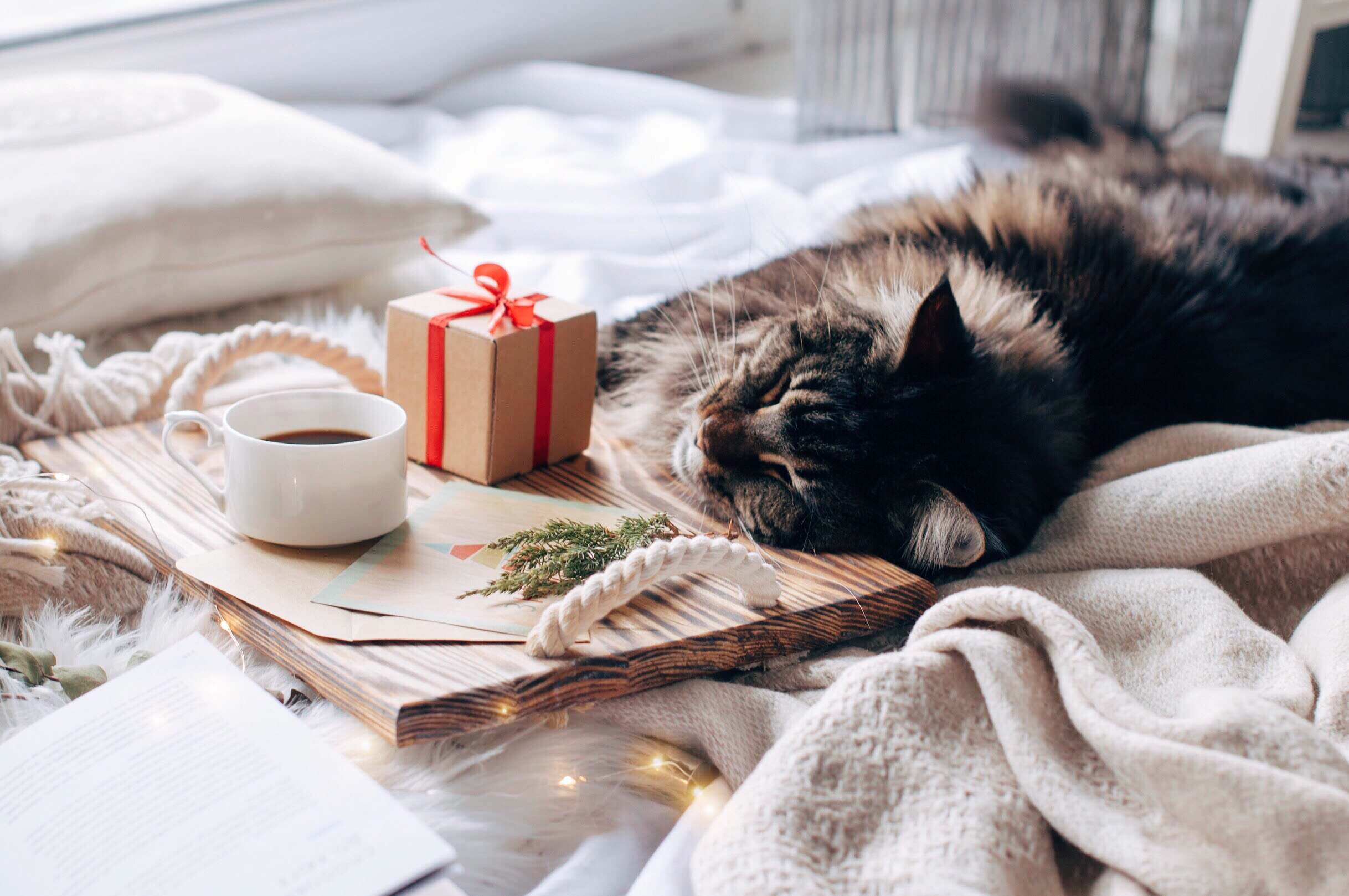 Cat all cozy and fell asleep near a warm cup of coffee.